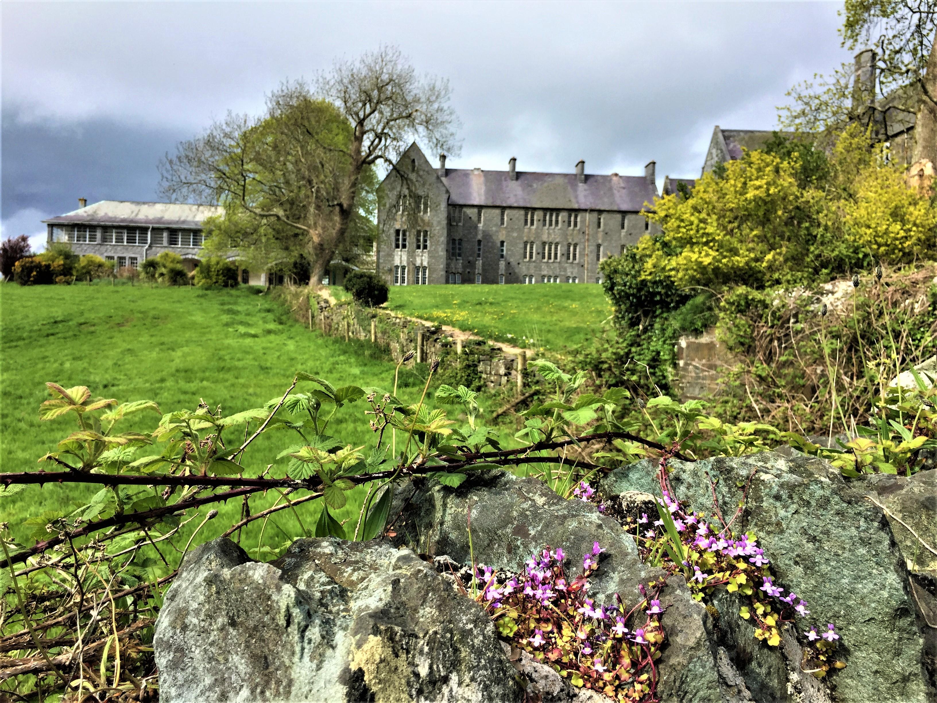 The Beginning of Spring, St Finan's Hospital, Killarney